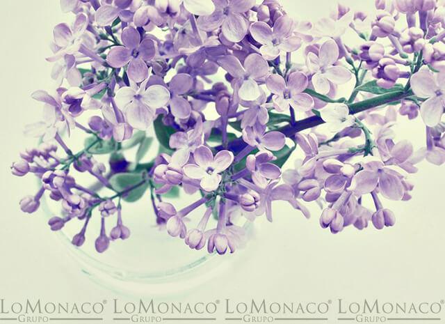 Imagen-LoMonaco-Plantas-dormir-mejor-1